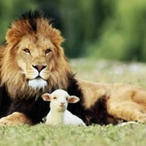 lion-and-the-lamb  mindfulness photo