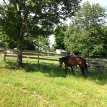 summer pasture2 william