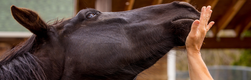 Sanctuary Horses